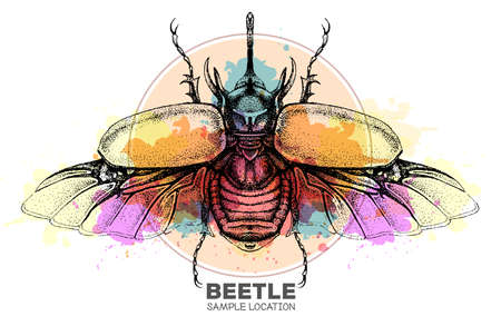 Realistic hand drawing rhinoceros beetle on watercolor background. Artistic Bug. Entomological vector illustration