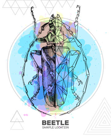 Realistic hand drawing and polygonal longhorn beetle on watercolor background. Artistic Bug. Entomological vector illustration