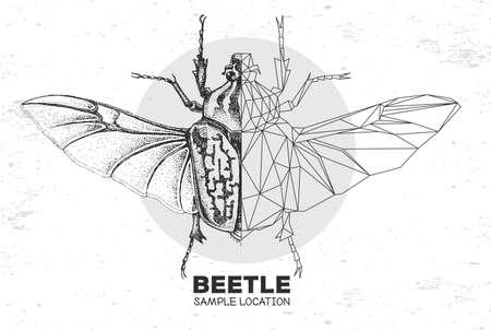 Realistic hand drawing and polygonal Goliath beetle. Artistic Bug. Entomological vector illustration