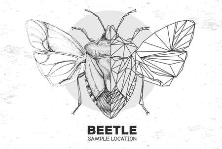 Realistic hand drawing and polygonal shield beetle. Artistic Bug. Entomological vector illustration