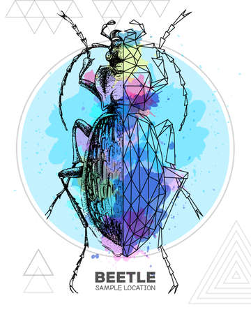 Realistic hand drawing and polygonal ground beetle on watercolor background. Artistic Bug. Entomological vector illustration Ilustração