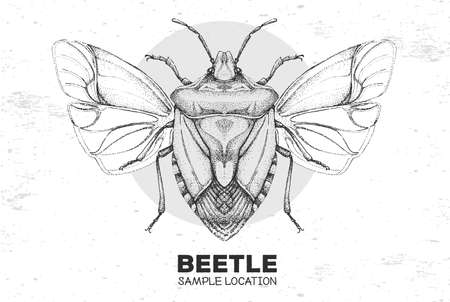 Realistic hand drawing shield beetle. Artistic Bug. Entomological vector illustration
