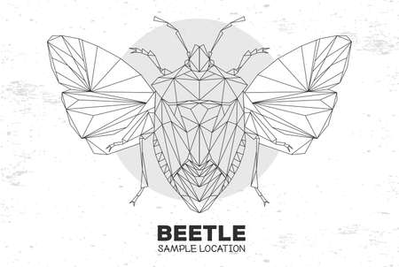 Abstract polygonal triangle shield beetle. Artistic Bug. Entomological vector illustration