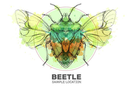 Realistic hand drawing shield beetle on watercolor background. Artistic Bug. Entomological vector illustration