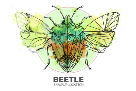 Realistic hand drawing and polygonal shield beetle on watercolor background. Artistic Bug. Entomological vector illustration