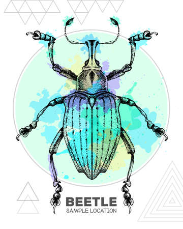 Realistic hand drawing Curculionidae beetle on watercolor background. Artistic Bug. Entomological vector illustration Ilustração