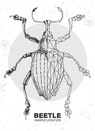 Realistic hand drawing and polygonal Curculionidae beetle. Artistic Bug. Entomological vector illustration