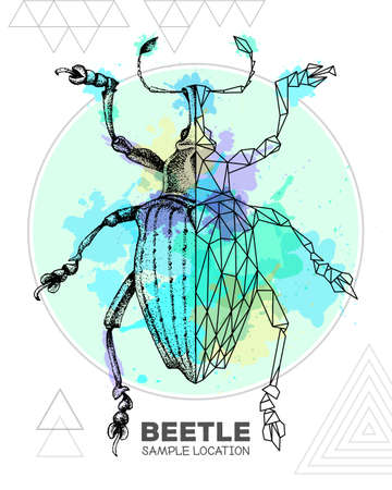 Realistic hand drawing and polygonal Curculionidae beetle on watercolor background. Artistic Bug. Entomological vector illustration Ilustração