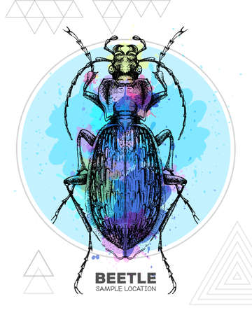 Realistic hand drawing ground beetle on watercolor background. Artistic Bug. Entomological vector illustration Ilustração