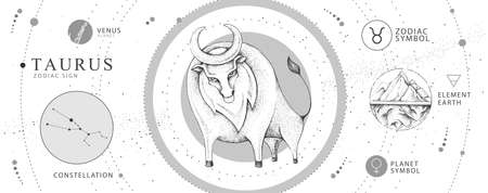 Modern magic witchcraft card with astrology Taurus zodiac sign. Realistic hand drawing bull head. Zodiac characteristic 向量圖像