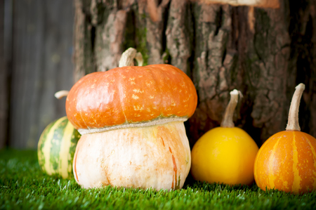 mini farm: Small decorative  pumpkins on green grass Stock Photo