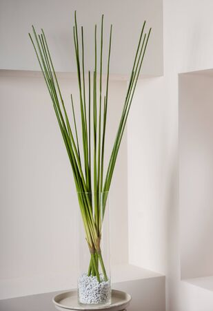 Artificial sedge in glass vase  for decoration