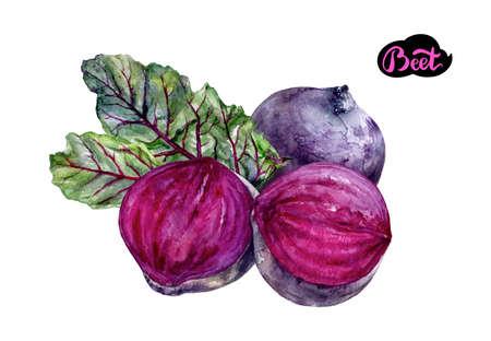 beet vegetable watercolor