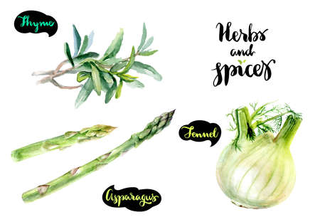 Asparagus, thyme, fennel watercolor
