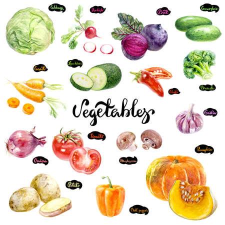Vegetables set watercolor illustration. Pumpkin, cabbage, radish, zucchini, beet, cucumber, tomato, onion, bell pepper carrot broccoli garlic mushrooms hand drawn set isolated on white Stock Photo