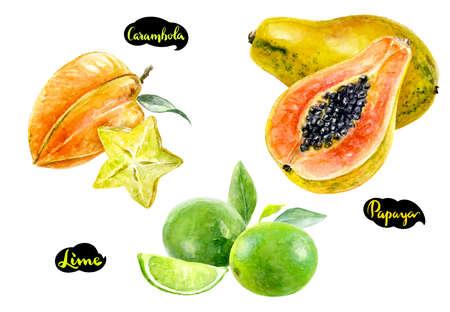 carambola papaya lime watercolor
