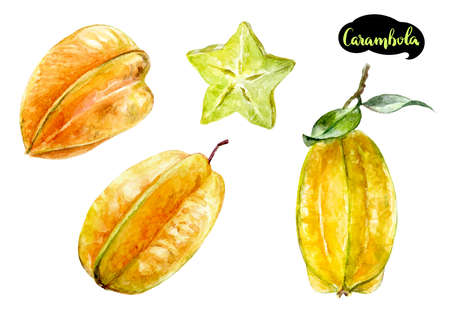 carambola watercolor illustration