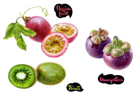 mangosteen passion fruit kiwi watercolor Banque d'images - 102385142