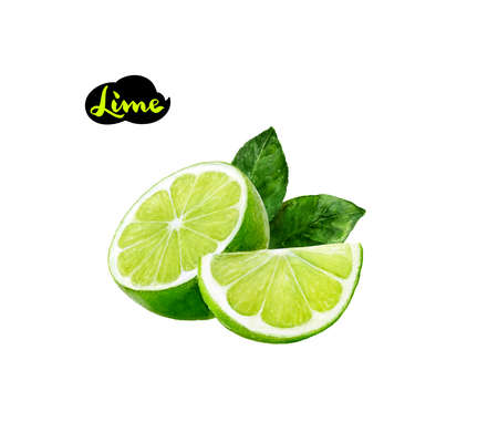 lime watercolor illustration Фото со стока