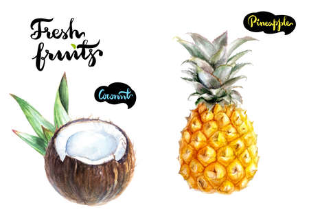 Fresh fruits watercolor illustration. Coconut, pineapple isolated on white background.