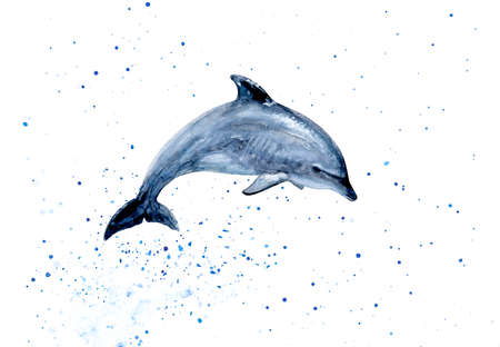 dolphin watercolor hand draw illustration