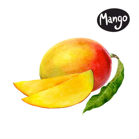 mango watercolor illustration Stok Fotoğraf - 107193251