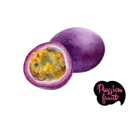 passion fruit watercolor illustration