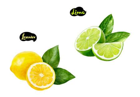 Lemon lime watercolor hand drawn illustration set Stock Photo