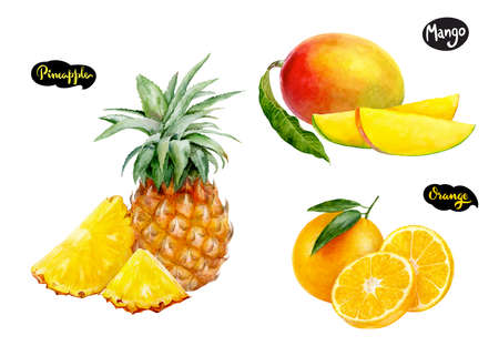orange pineapple mango watercolor hand drawn illustration set 写真素材