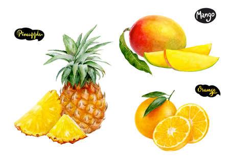 orange pineapple mango watercolor hand drawn illustration set Stock Photo
