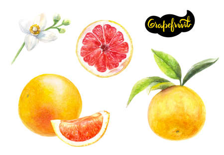 grapefruit watercolor hand drawn illustration isolated on white Imagens