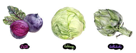 Artichoke, beetroot, cabbage set watercolor hand drawn illustration. Stok Fotoğraf