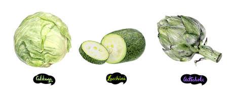 Artichoke, zucchini, cabbage set watercolor hand drawn illustration.