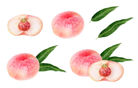 Pink figs peach fruit watercolor isolated on white background