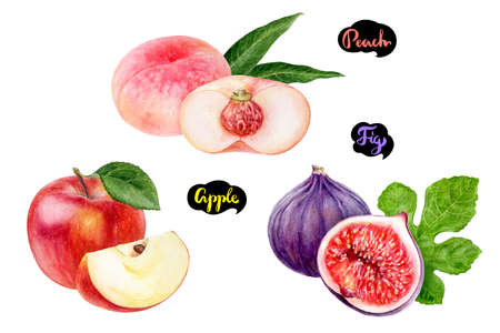 Apple fig peach set fruit watercolor isolated on white background