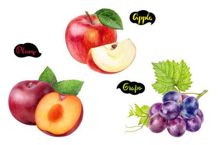 Apple grape plum set fruit watercolor isolated on white background Zdjęcie Seryjne