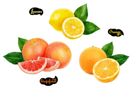 Grapefruit lemon orange set fruit watercolor isolated on white background