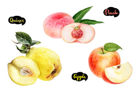 Apple peach quince set fruit watercolor isolated on white background