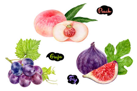 Grape fig peach set fruit watercolor isolated on white background