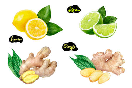 Ginger lemon lime set watercolor isolated on white background