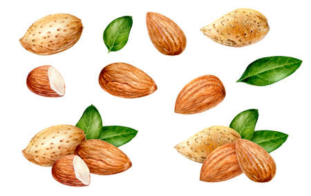 Almond set watercolor isolated on white background Фото со стока