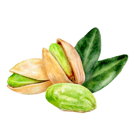 Pistachio composition watercolor isolated on white background