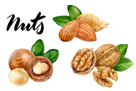 Walnut almond macadamia set composition watercolor isolated on white background