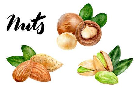 Pistachio almond macadamia set composition watercolor isolated on white background