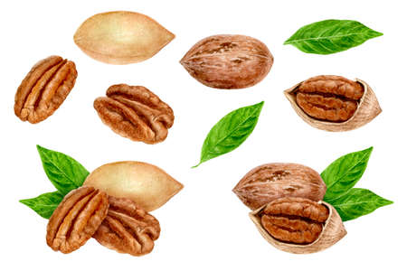 Pecan nut set composition watercolor isolated on white background