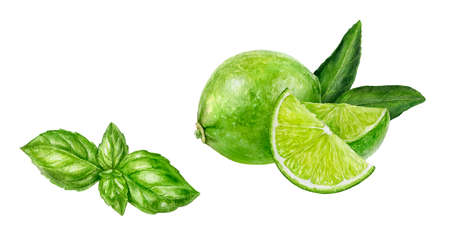 Basil lime set composition watercolor isolated on white background Zdjęcie Seryjne