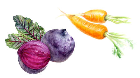 Beetroot carrot set composition watercolor isolated on white background 스톡 콘텐츠