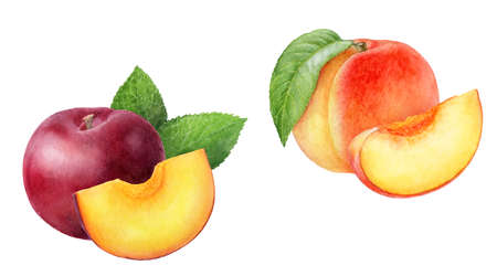 Peach plum set composition watercolor isolated on white background
