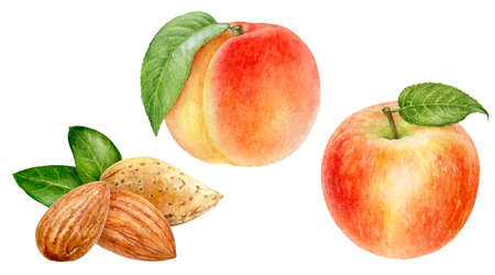 Peach almond apple set watercolor isolated on white background 写真素材