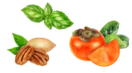 Persimmon pecan basil watercolor hand drawn illustration isolated on white background.
